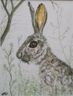 Hare today gone tomorrow (Watercolour )