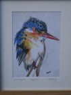 King Fisher (Watercolour)