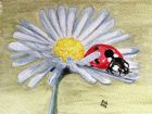 Ladybird lunch (Watercolour and pastel)<br />5x7